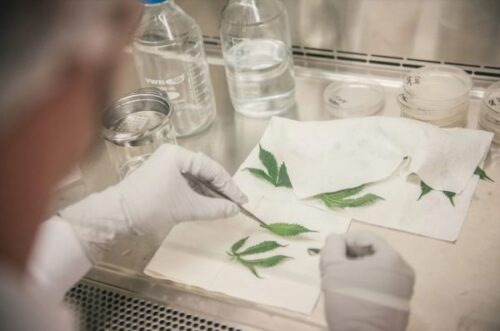 Canopy-Growth-Extraction-Lab-600×397