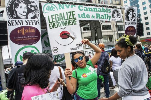 daily news mmj legalize rally
