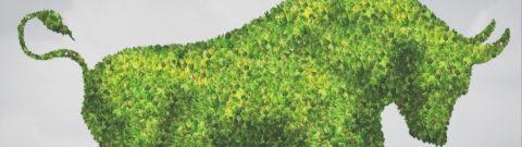 """MJBulls.com """"Cannabis Investor Spotlight"""" Phyto Partners"""